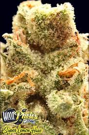173 best marijuana strain reviews and pictures images on pinterest