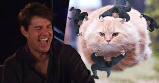 Tom Cruise Meme - cool videos tom cruise busts a gut when shown memes about himself