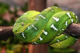 a green snake wallpapers green snake id 68471 u2013 buzzerg