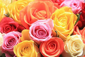 Different Color Roses Rose Fund Raiser News Aroundptown Com