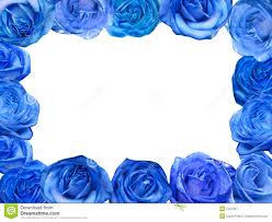 Blue Roses Blue Roses Frame Royalty Free Stock Photography Image 5107937
