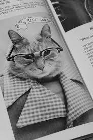 cat high yearbook el libro cat high the yearbook un mundo de gatos colegiales