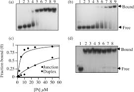 Dna Mapping Mapping And Conformational Characterization Of The Dna Binding