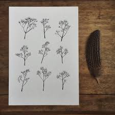 baby s breath flowers gypsophila baby s breath flower illustration a4 print
