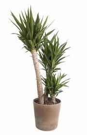 types of indoor plants other benefits of indoor plants best