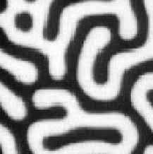 pattern formation zebra brains in silicon