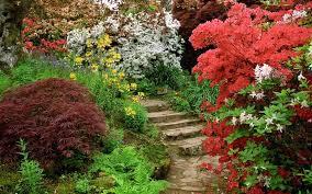 imagenes de jardines pequeños con flores 5 árboles para jardines pequeños plantas
