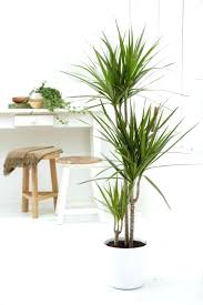 astonishing house plants pictures common house plants pictures