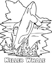 coloring page killer whale amazing killer whale or orca coloring page get coloring pages