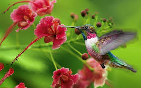bird wallpapers 13 beautiful hd and 4k wallpapers of exotic birds that you should