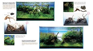 Amano Aquascaping Rules Arrangement Planted Tanks Aquascaping Amano