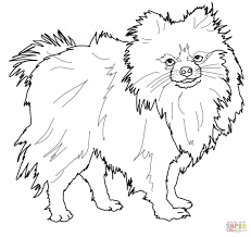 pomeranian dog animal pet coloring page coloring pages