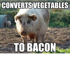 Funny Bacon Meme - converts vegetables to bacon funny pig meme
