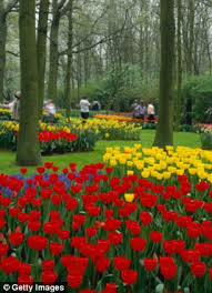dutch river cruise holidays esther rantzen finds tulip heaven in