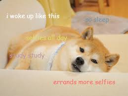 What Breed Is Doge Meme - japanese dogs the internet stars japan info