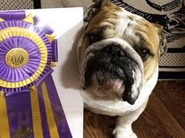bulldog club of america division vi specialty u2013 sunday march 27