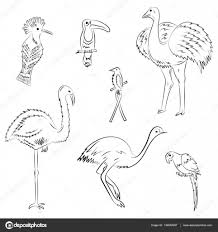 hand drawn exotic tropical birds doodle drawings of parrot