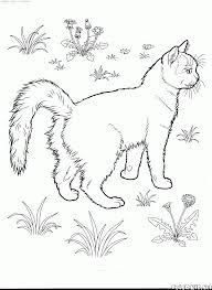 turkish van japanese bobtail cats circle illustration japanese