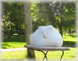bungalow of bunnies dutch u0026 english angora rabbits blog