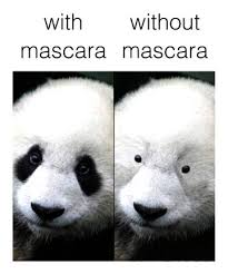 Panda Meme Mascara - all pandas 17 animals that are killing their beauty game page 15