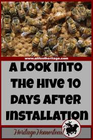 the adventures of hutch the honeybee 17 best images about homestead inspiration on pinterest crop