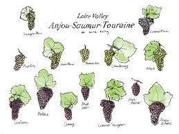 loire valley wine guide wine folly