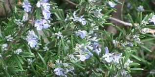 winter flowering plants garden flowers reviews