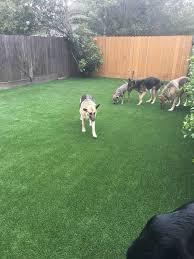 dog runs kennels u0026 pet turf celebrity greens