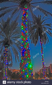 christmas decorated palm tree in orlando florida stock photo
