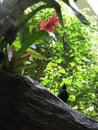 Flower And Bird - photo entry flower and bird centralpark com