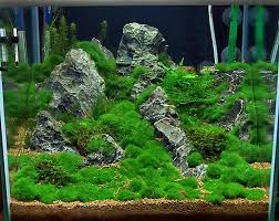 Aquascape Shop Kundenaquarien Aquascaping Shop Für Naturaquarien