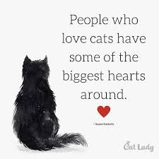 Awesome Quotes About Cats Being - quotes about cats impressive pita cat s top 10 cat quotes
