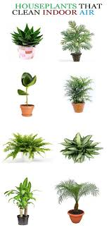 best plants for bedroom best house plants for clean air and better health plants