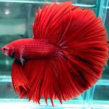 lovable images fish wallpapers free download images for fish