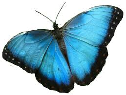 butterfly is god s design