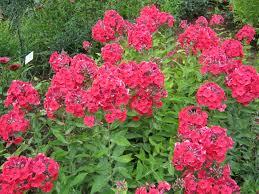 free images flower decoration orange red color colorful
