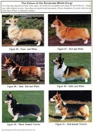 own responsibly the comprehensive corgi guide a resource for new