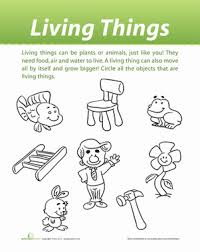 classification of living things worksheet education com