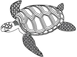 turtle coloring pages teenage mutant ninja turtle coloring pages