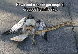 Silly Meme - 31 most funny snake meme pictures and images