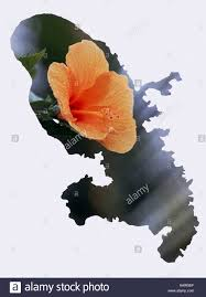 Martinique Map Orange Hibiscus In The Shape Of The Martinique Map Stock Photo