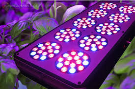 solid apollo led grow lights are tuned to optimize plant growth