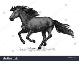 mustang horse drawing horse racing vector sketch black wild stock vector 560027278