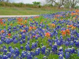 texas native plants list pressroom archives lady bird johnson wildflower center