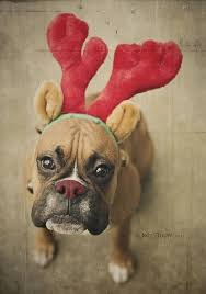 314 best boxers images on pinterest boxer love animals and dogs