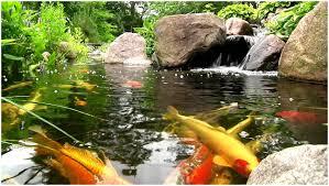 backyards splendid backyard pond waterfalls landscape design
