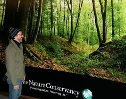 corporate interiors wall murals lobby graphics corporate decor wall mural for nature conservancy