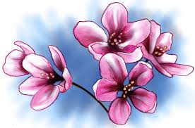 cherry blossom by badfish1111 on deviantart