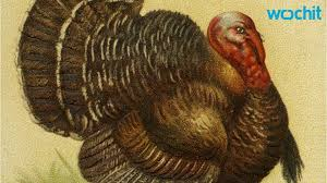 do you why eat turkey on thanksgiving