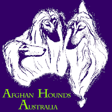 afghan hound breeders qld afghanhounds oz